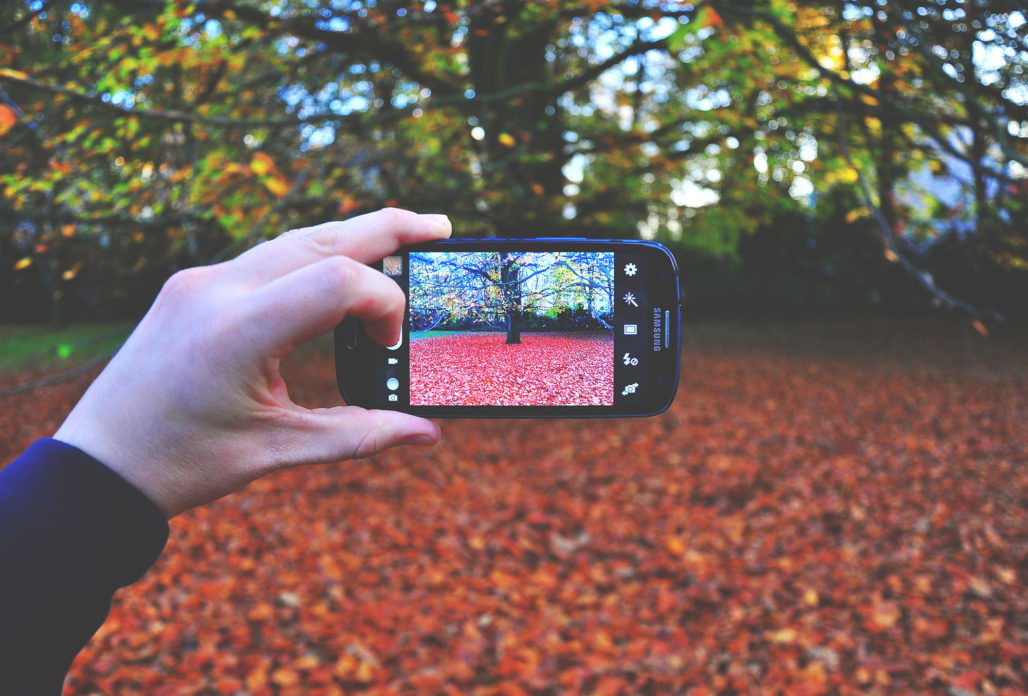 taking a photo of leaves